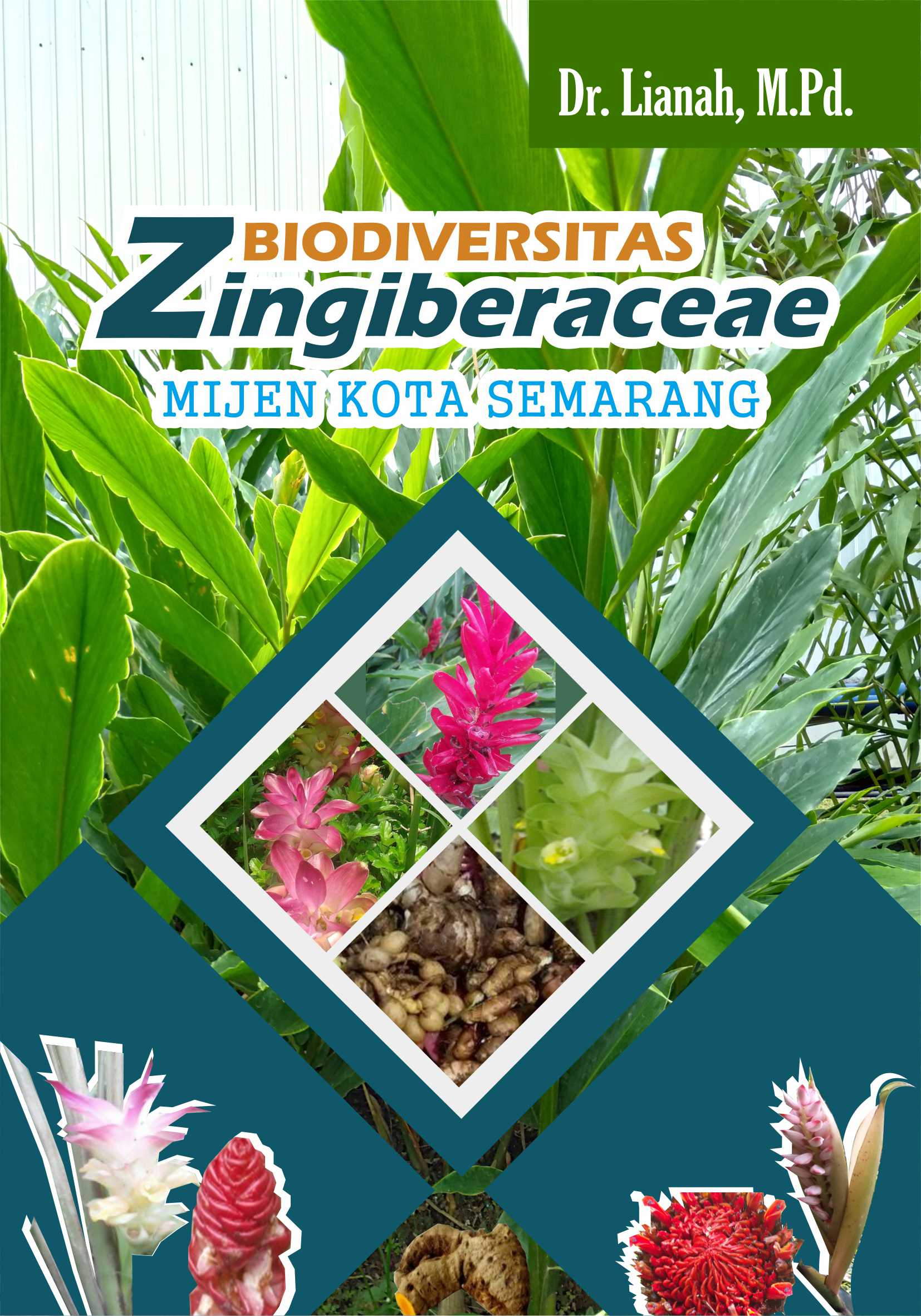 Biodiversitas zingiberaceae mijen kota Semarang [sumber elektronis]