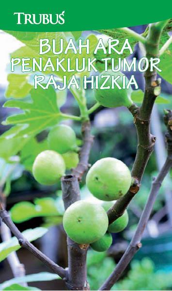 Buah ara penakluk tumor raja hizkia [sumber elektronis]