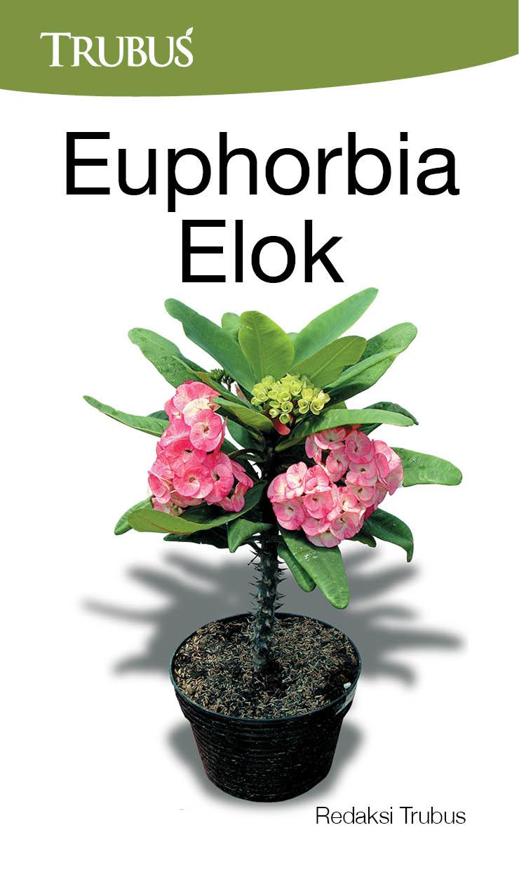 Euphorbia elok [sumber elektronis]