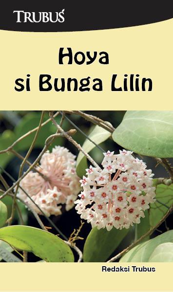 Hoya si bunga lilin [sumber elektronis]