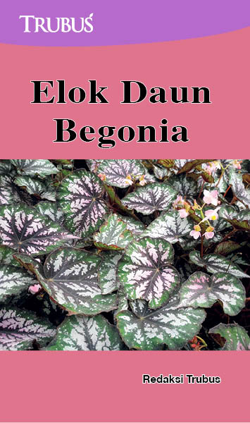 Elok daun begonia [sumber elektronis]