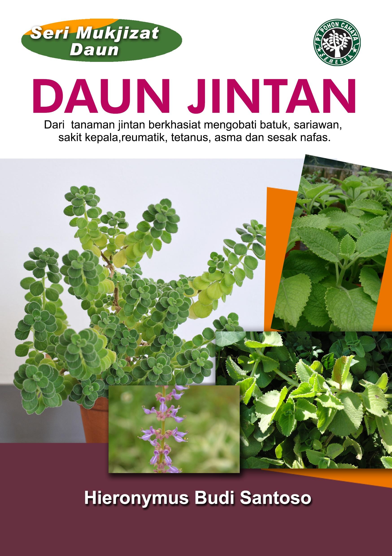Daun jintan [sumber elektronis] : dari tanaman jintan berkhasiat mengobati batuk, sariawan, sakit kepala,reumatik, tetanus, asma dan sesak nafas