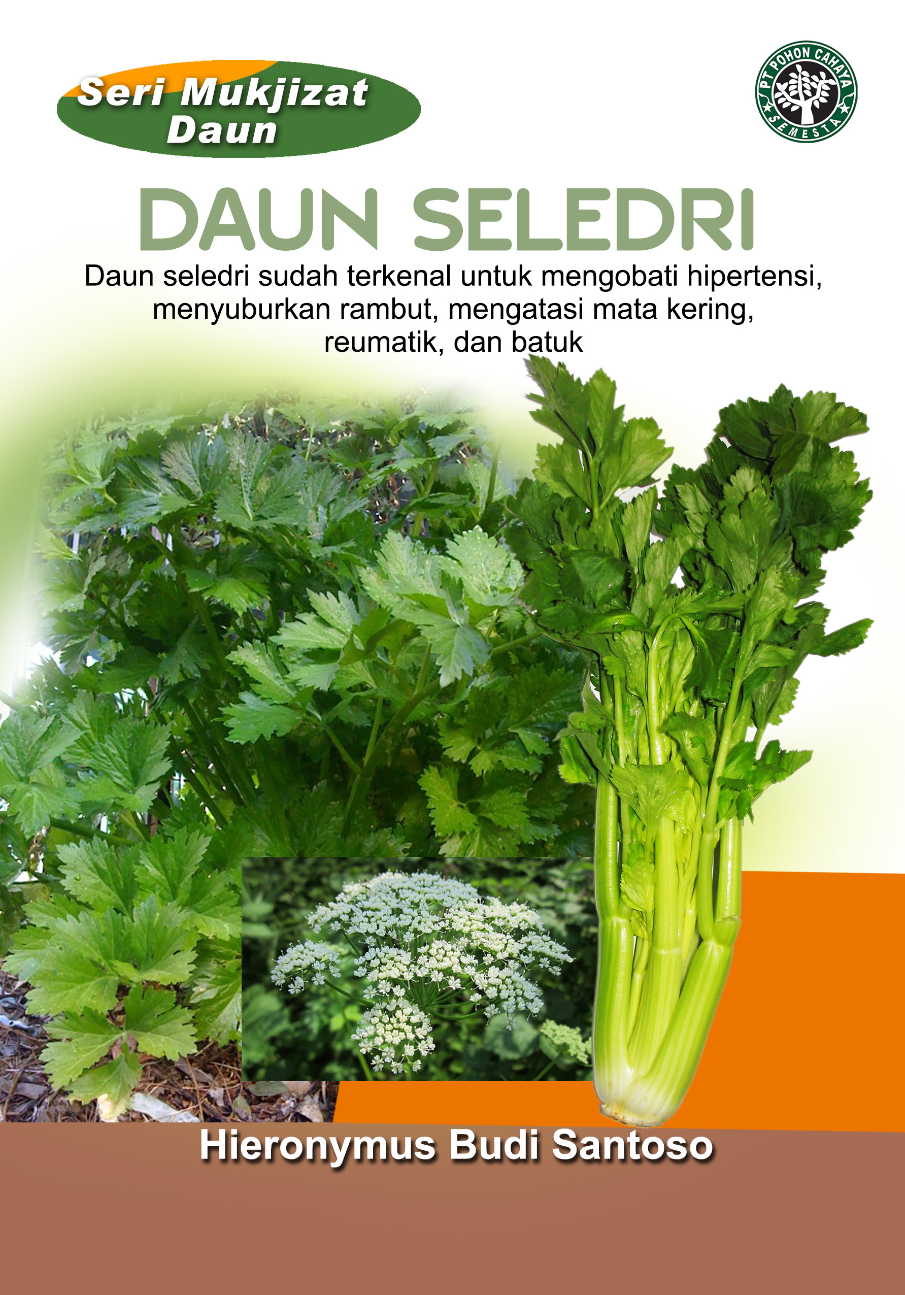 Daun seledri [sumber elektronis] : daun seledri sudah terkenal untuk mengobati hipertensi, menyuburkan rambut, mengatasi mata kering, reumatik, dan batuk