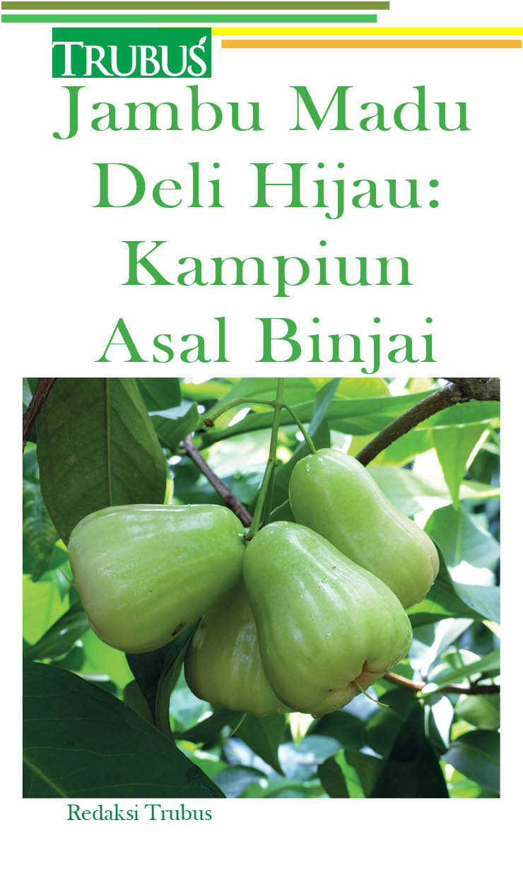 Jambu madu deli hijau [sumber elektronis] : kampiun asal Binjai