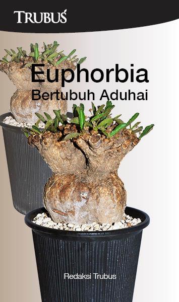 Euphorbia bertubuh aduhai [sumber elektronis]